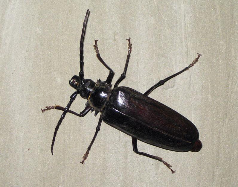 Entomological warfare  Wikipedia